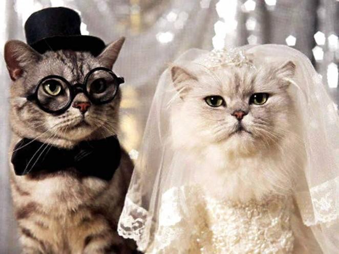 Оригинальное свадебное поздравление