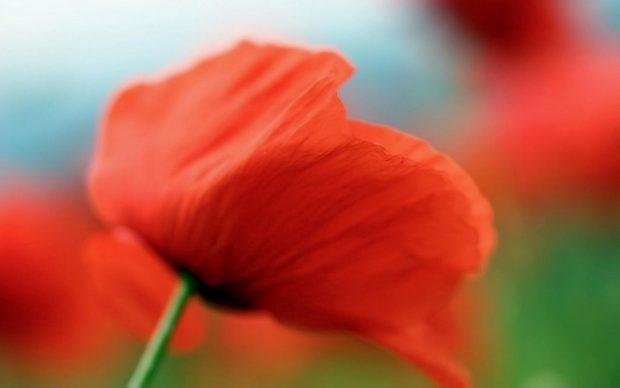 Притча на свадьбу о цветке и женщине